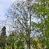 Co nám prozrazují příběhy stromů